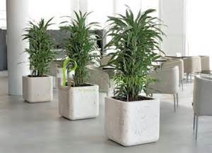 office plant decoration kl 1000 ideas about artificial plants on pinterest silk plants fake plants and artificial topiary