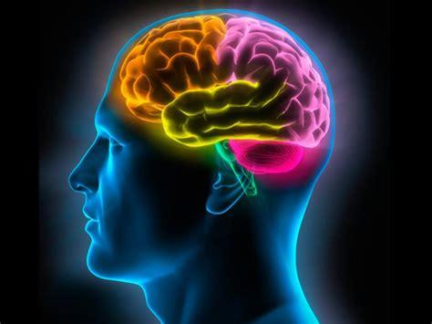 imagenes de el cerebro humano el cerebro olvida para ahorrar energ 237 a