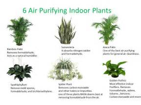 top 30 plants to detox your home elephant journal