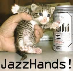 funny cat pictures funny cat photos funny cat pictures captions tedlillyfanclub
