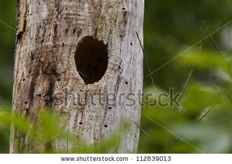 Bucks County Prothonotary Search Nest Cavities Stock Photos Images Pictures