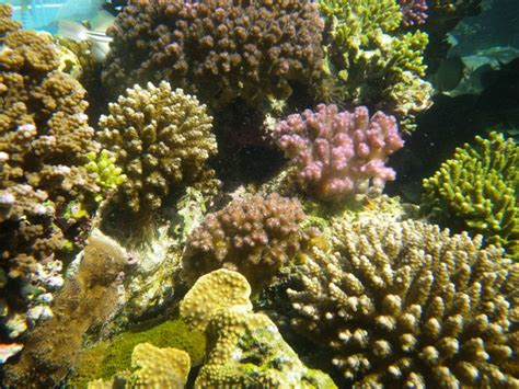 best light spectrum for coral growth correct spectrum and amount is needed for coral growth