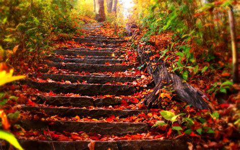 Fall 5 Steps To Your Fresh Beautiful Glowing Skin by Nature Road Hd Duvarkağıdı And Arka Plan 1920x1200