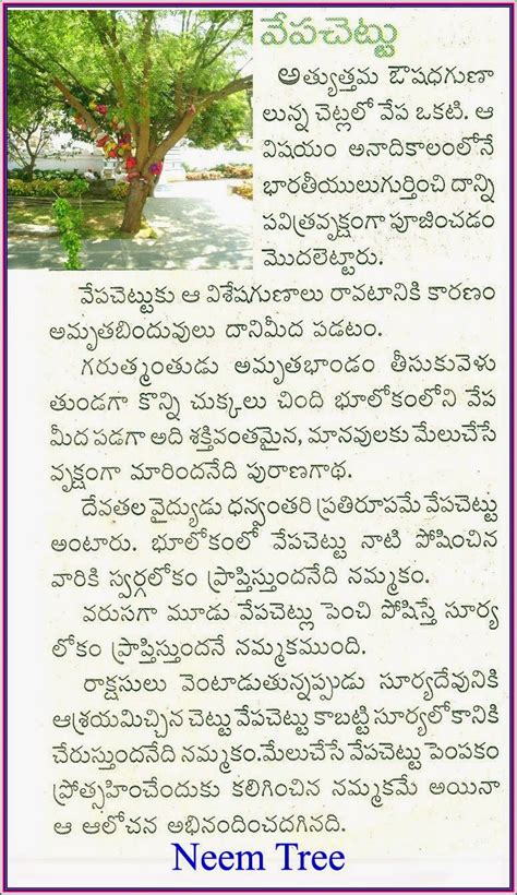 Neem Tree Essay by Essay On Mango Tree In Telugu Theleaf Co