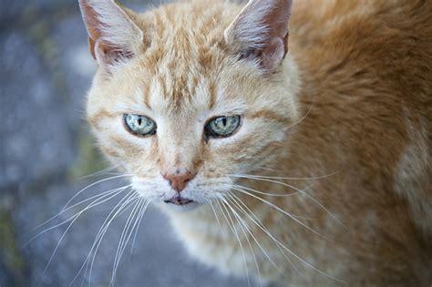 Katzen Im Garten Abwehren Phlora De