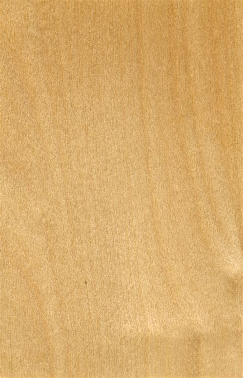 birke holz great wood textures