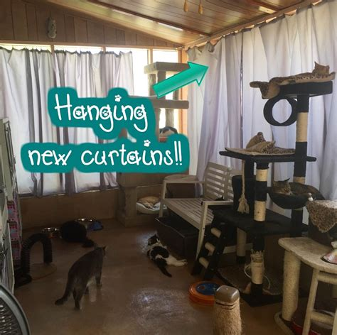 keep cat out of room fundraiser by dail enrichment project back cat rooms