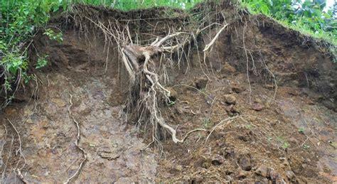 bio erosi adalah fenomena terjadinya erosi tanah ilmu alam