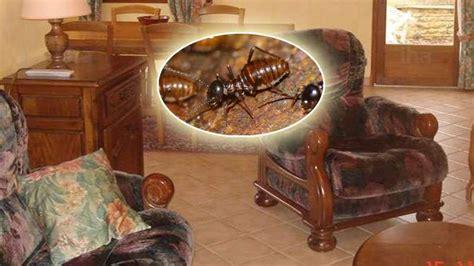 Termites In Furniture by Termites In Furniture Termites