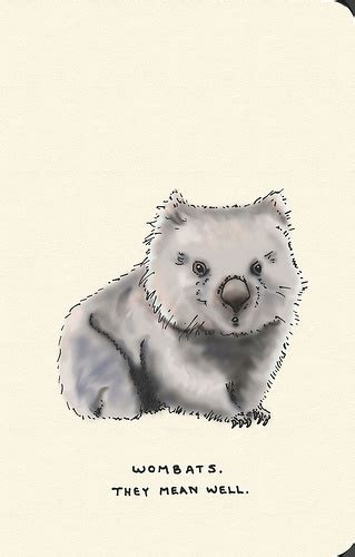 wombat tattoo designs 29 best wombats rule images on animals