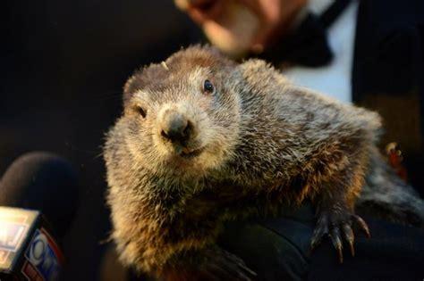 groundhog day usa staten island chuck predicts early on groundhog day