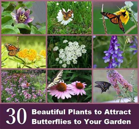 how to attract butterflies to your backyard 30 beautiful plants to attract butterflies to your garden