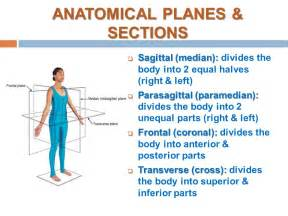 introduction to anatomy skeletal system bone ppt