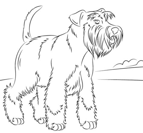 Schnauzer Terrier Coloring Page Dog Breeds Picture Schnauzer Coloring Pages