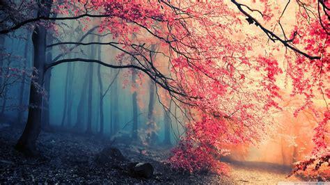 forest fall colors ultra hd desktop background wallpaper