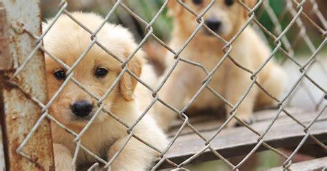 puppy mill facts puppy mill facts pet behavior center petpremium