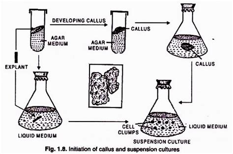 Plants That Grow In Complete Darkness by Conditions And Stages Of Tissue Culture With Diagram