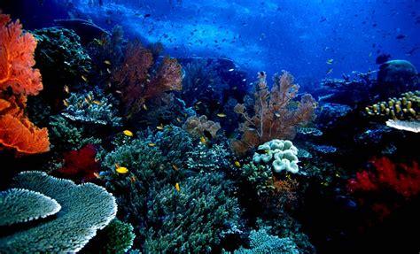 wallpaper keindahan alam bawah laut lokasi dan harga tiket masuk taman laut bunaken pesona