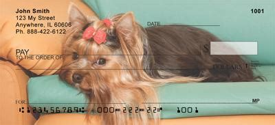 how to your yorkie to on a pad yorkies are checks yorkies are personal checks