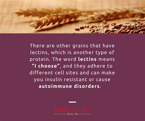 whole grains lectins 1000 images about omni resource center on