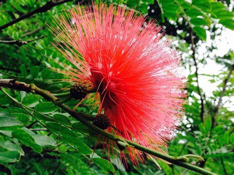 immagini di fiori esotici frutti esotici fiore avatar 183 foto gratis su pixabay