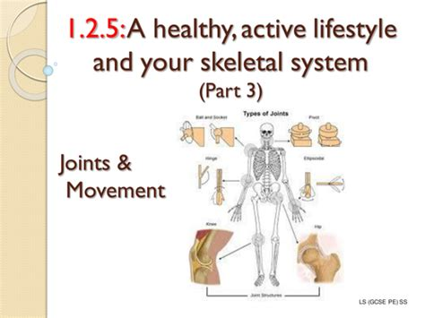 33 3 the respiratory system worksheet answers edexcel gcse pe 1 2 5 a healthy active lifestyle and your skeleton system by simisterlucy