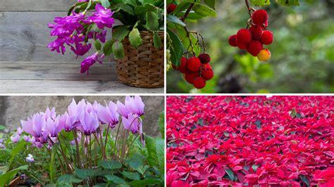 terrazzo fiorito tutto l anno oknoplast