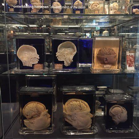 tripadvisor amsterdam museum museum vrolik amsterdam all you need to know with