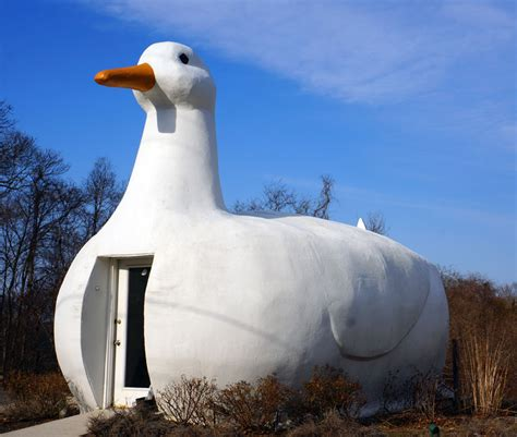 Duck Decorated Shed by What Is The Difference Between A Duck And Decorated Shed