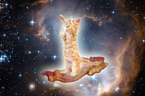 wallpaper galaxy cat galaxy cat wallpaper wallpapersafari