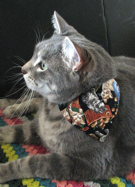 fresh paint  cat loves  wear fashion bandana