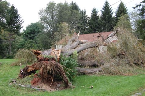 tree falls on house insurance coverage does house insurance cover tree damage 28 images does house insurance cover tree
