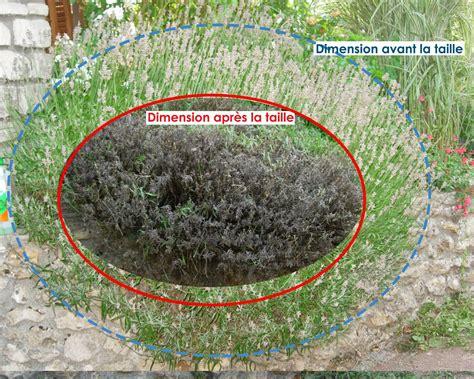 hgp paysage taille des lavandes