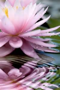 Water And Lotus 25 Best Ideas About Water Tattoos On