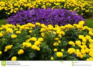 Yellow Flower Garden Purple And Yellow Flower Garden Stock Photography Image 18882732