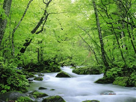 wallpaper free nature all free wallpaper download wallpaper nature free download