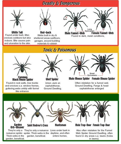 a guide to identifying your home d 233 cor style spider identification chart bugs pinterest yahoo