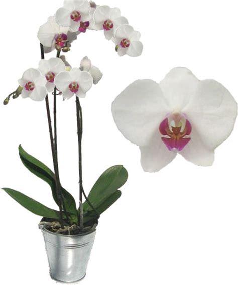 toutsurtout biz comment entretenir une orchid 233 e