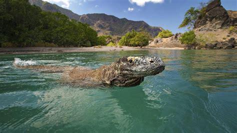 dracheninsel komodo bei bali macht ein jahr lang fuer