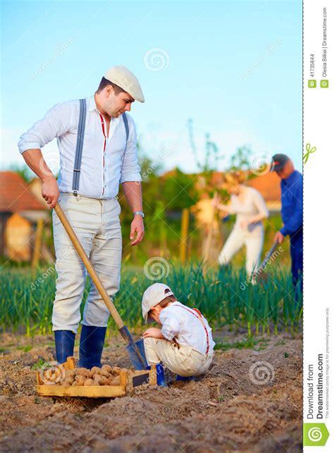 family farm and garden family planting potatoes in vegetable garden stock photo