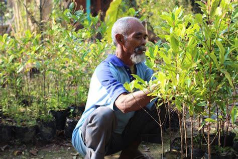Bibit Kambing Di Wonogiri sosok pahlawan di balik hijaunya gunung gendol news from indonesia