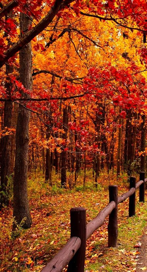 fall colors decorating pinterest