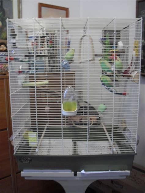 ziprar gabbie misure giuste cocorite e pappagallini ondulati