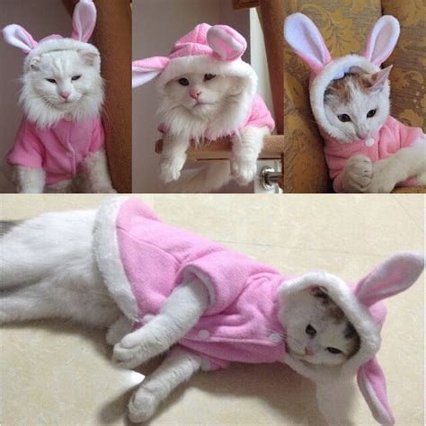 cat clothes easter bunny cat reviews shopping easter bunny