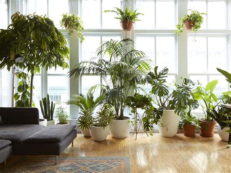 houseplants   survive urban apartments  light