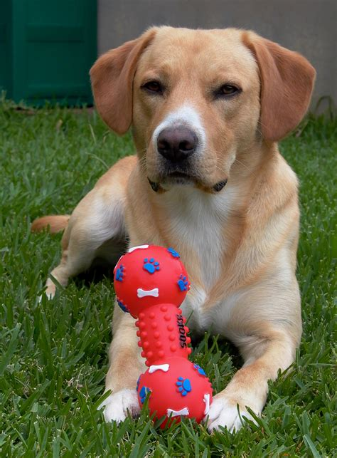 best chew toys for dogs chew toys dogs pictures to pin on tattooskid