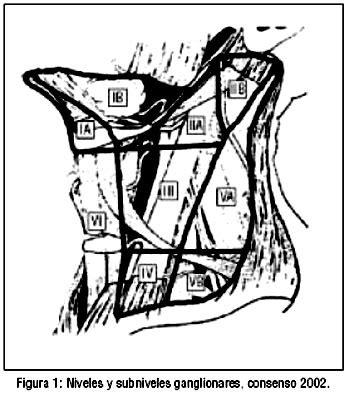 caracterizacion de cadenas ganglionares cervicales actualizaci 243 n en met 225 stasis ganglionar de carcinoma