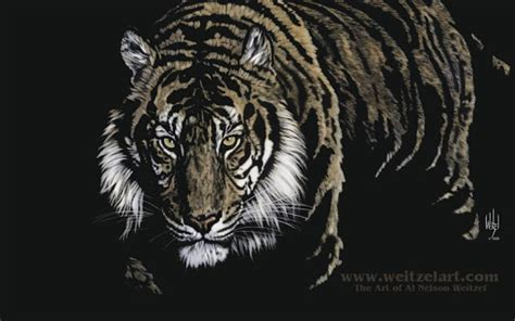 hd wallpaper for android tiger download black tiger live hd wallpapers for android black