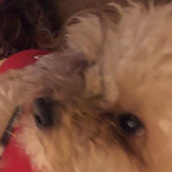 petsmart grooming prices yorkie mutt cutts pet grooming pet groomers chino ca reviews photos yelp