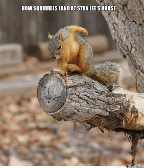 Dead Squirrel Meme - 39 very funny squirrel meme images gifs pictures picsmine